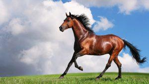 Quanto-costa-un-cavallo