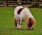 Quanto-costa-un-pony
