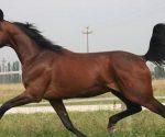 quanto-costa-mantenere-un-cavallo